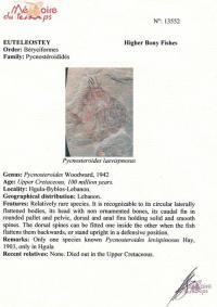 окаменелость Вудворд, ранний мелавой период, 100 миллионов лет.